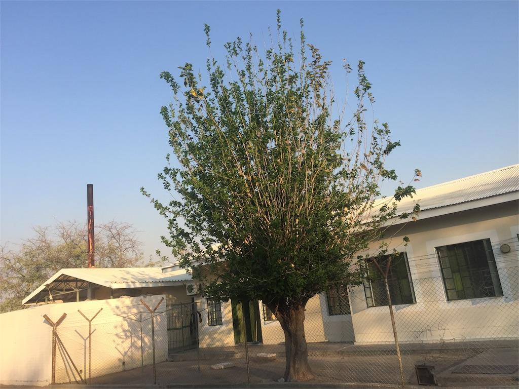 f:id:TPVC28-Namibia:20160831221539j:image
