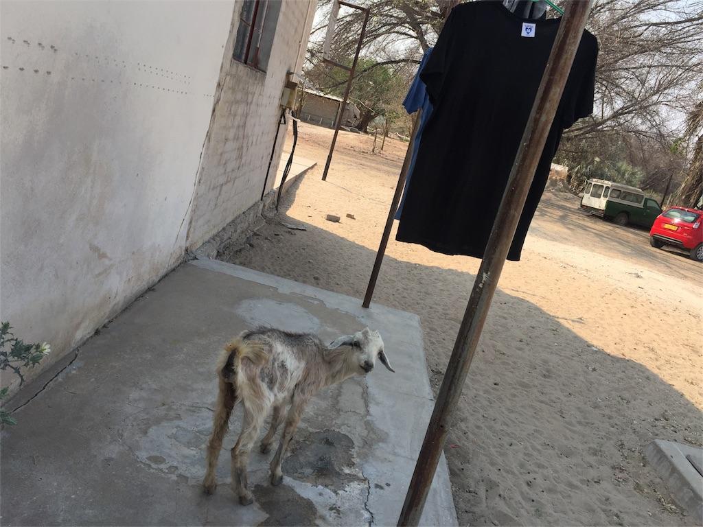 f:id:TPVC28-Namibia:20160917154807j:image