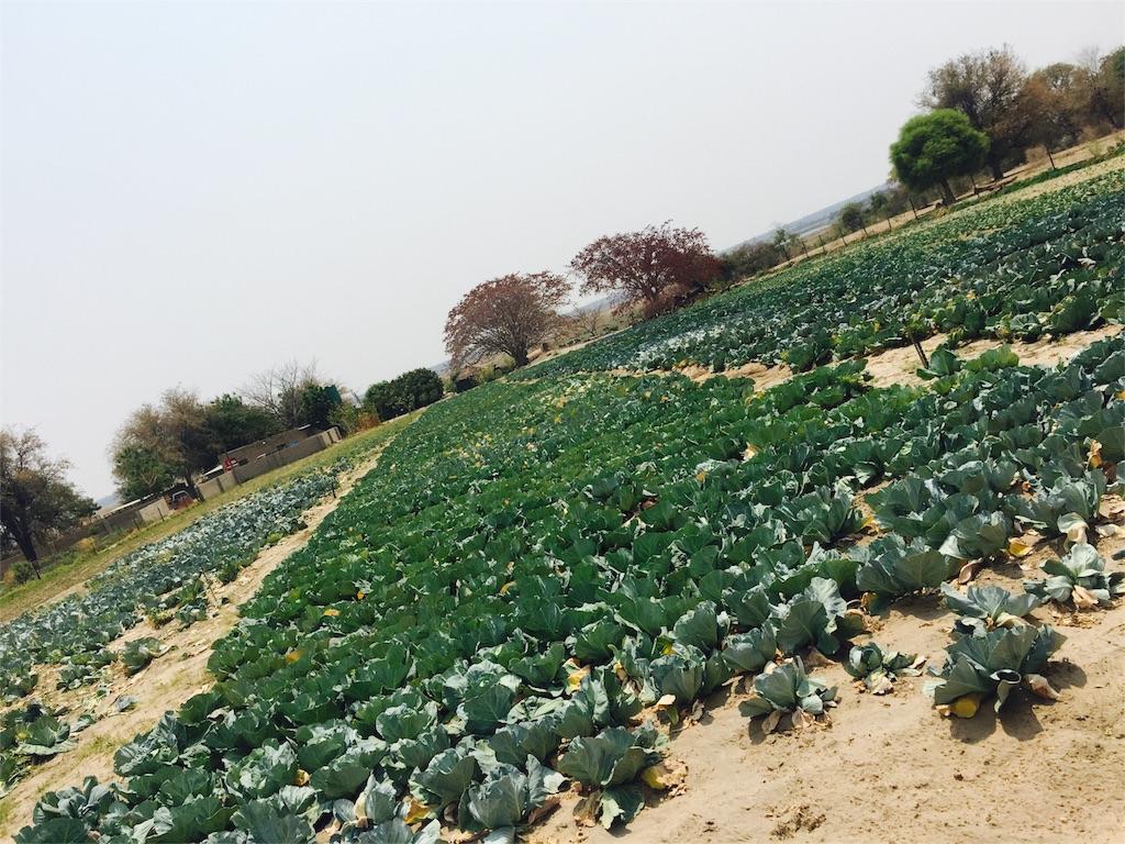 f:id:TPVC28-Namibia:20160927033939j:image