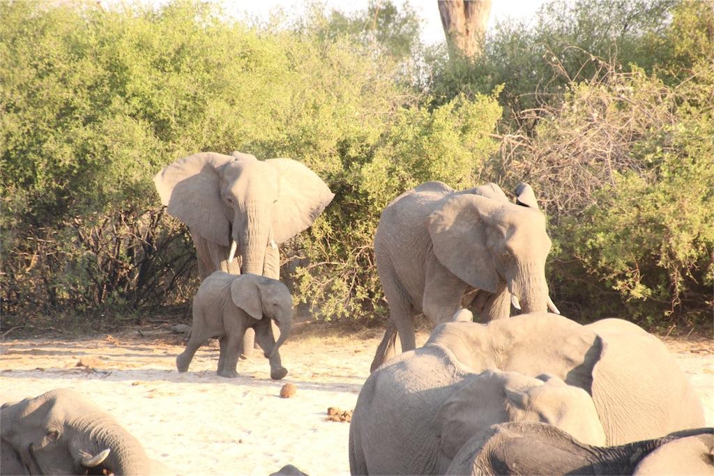 f:id:TPVC28-Namibia:20161017043119j:image
