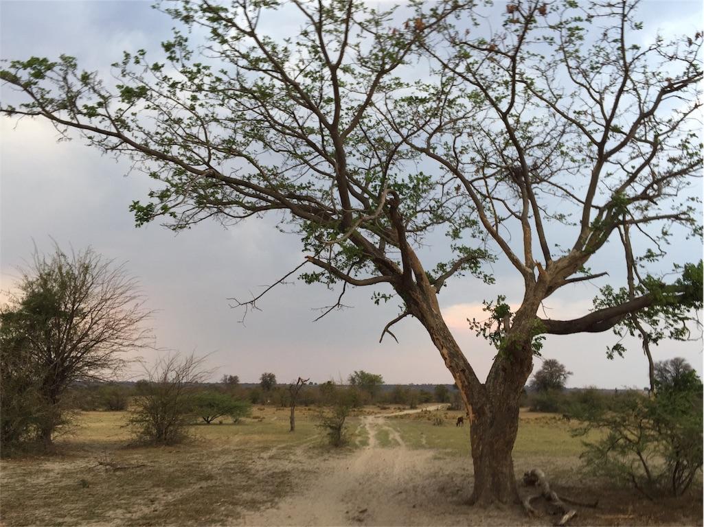 f:id:TPVC28-Namibia:20161022220707j:image