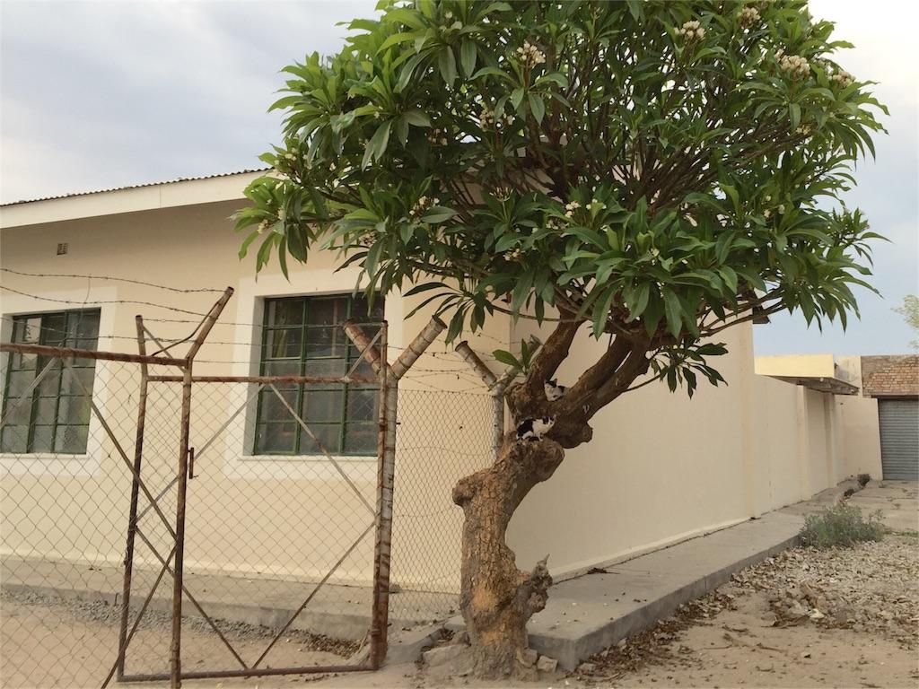 f:id:TPVC28-Namibia:20161025021942j:image