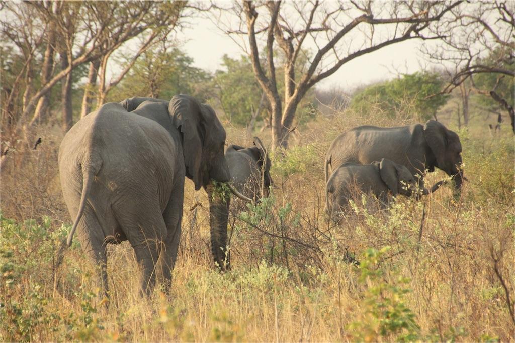 f:id:TPVC28-Namibia:20161106061613j:image