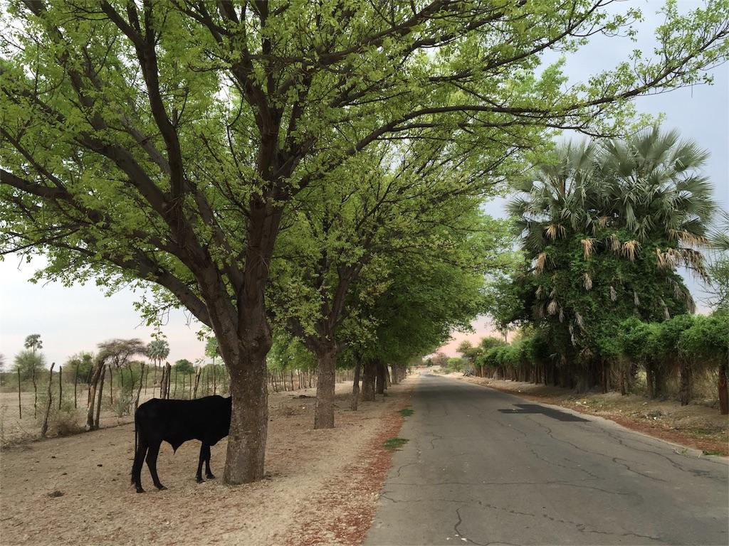 f:id:TPVC28-Namibia:20161110125725j:image