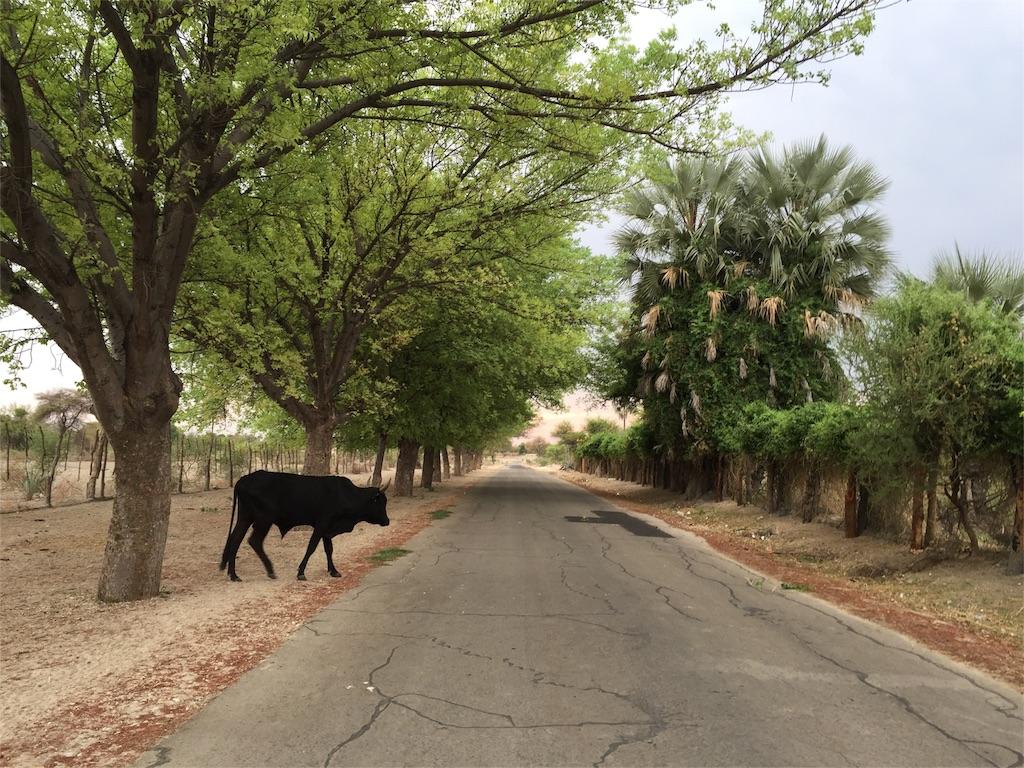 f:id:TPVC28-Namibia:20161110130233j:image