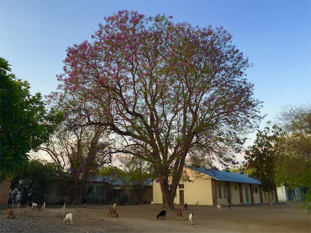 f:id:TPVC28-Namibia:20161119150152j:image