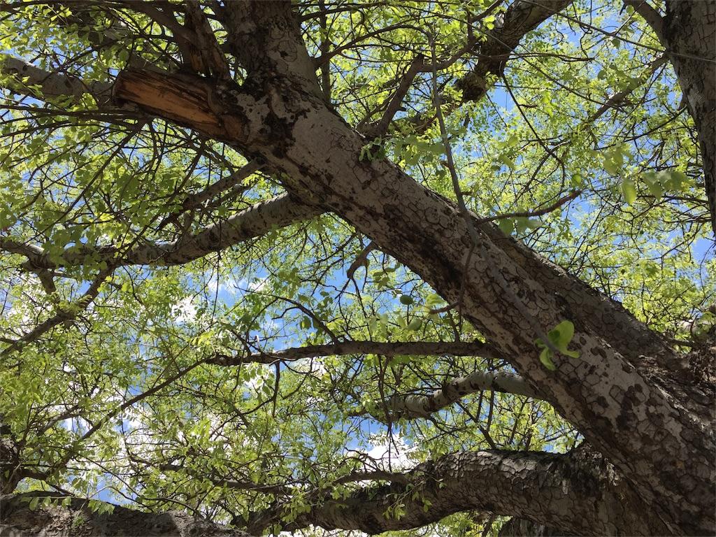 f:id:TPVC28-Namibia:20161119152913j:image