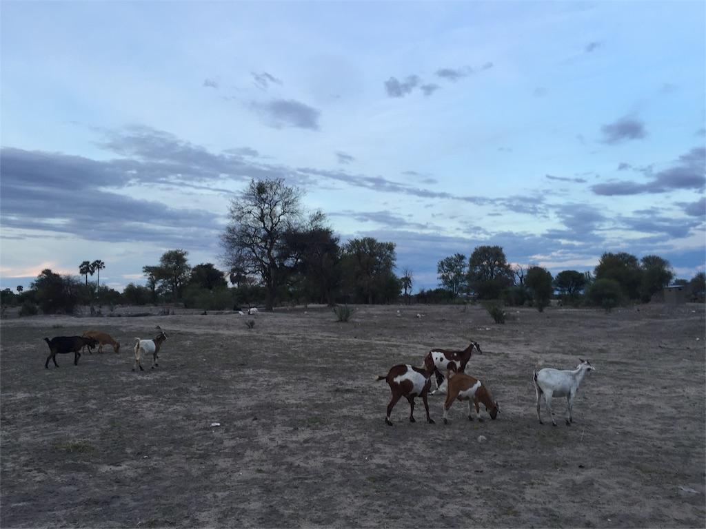 f:id:TPVC28-Namibia:20161123093556j:image