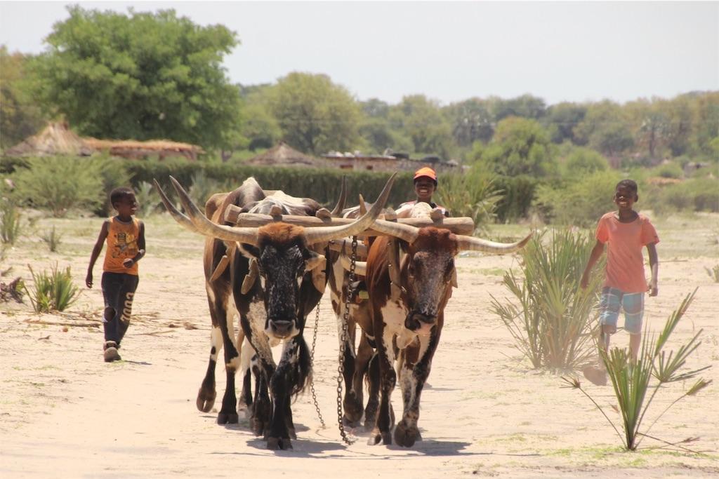 f:id:TPVC28-Namibia:20161206162223j:image