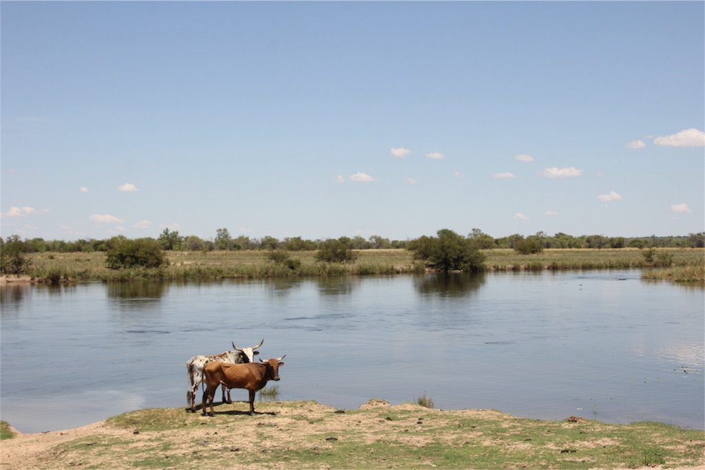f:id:TPVC28-Namibia:20161206162548j:image
