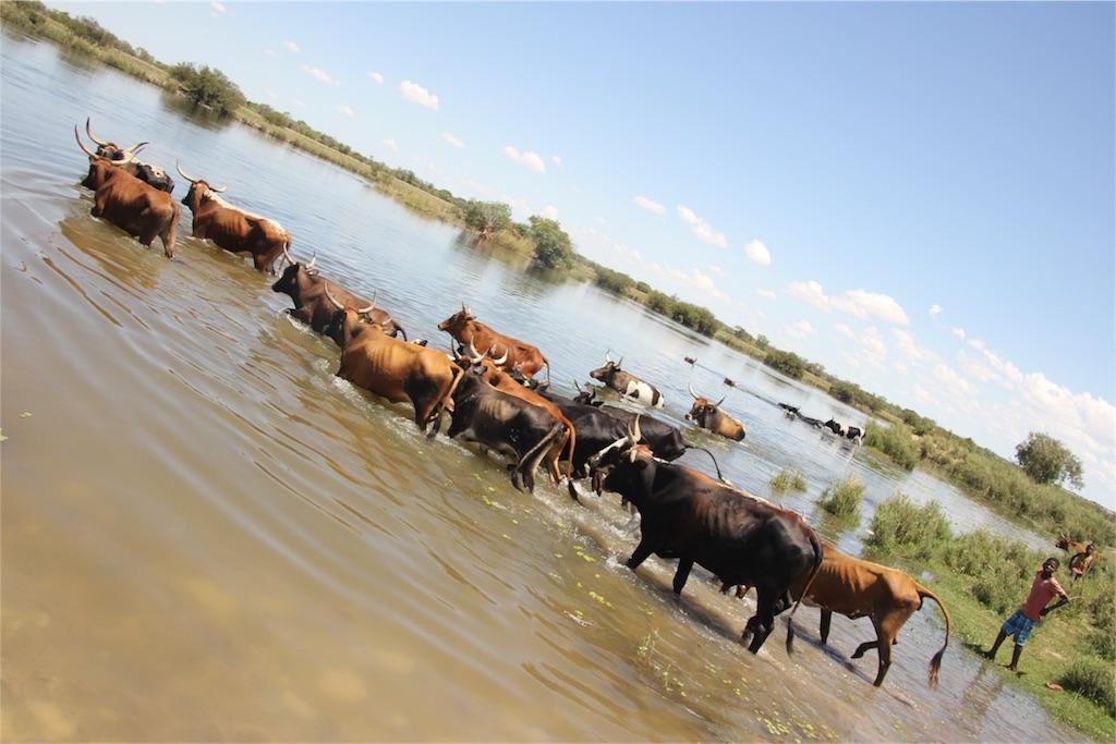 f:id:TPVC28-Namibia:20161206162732j:image