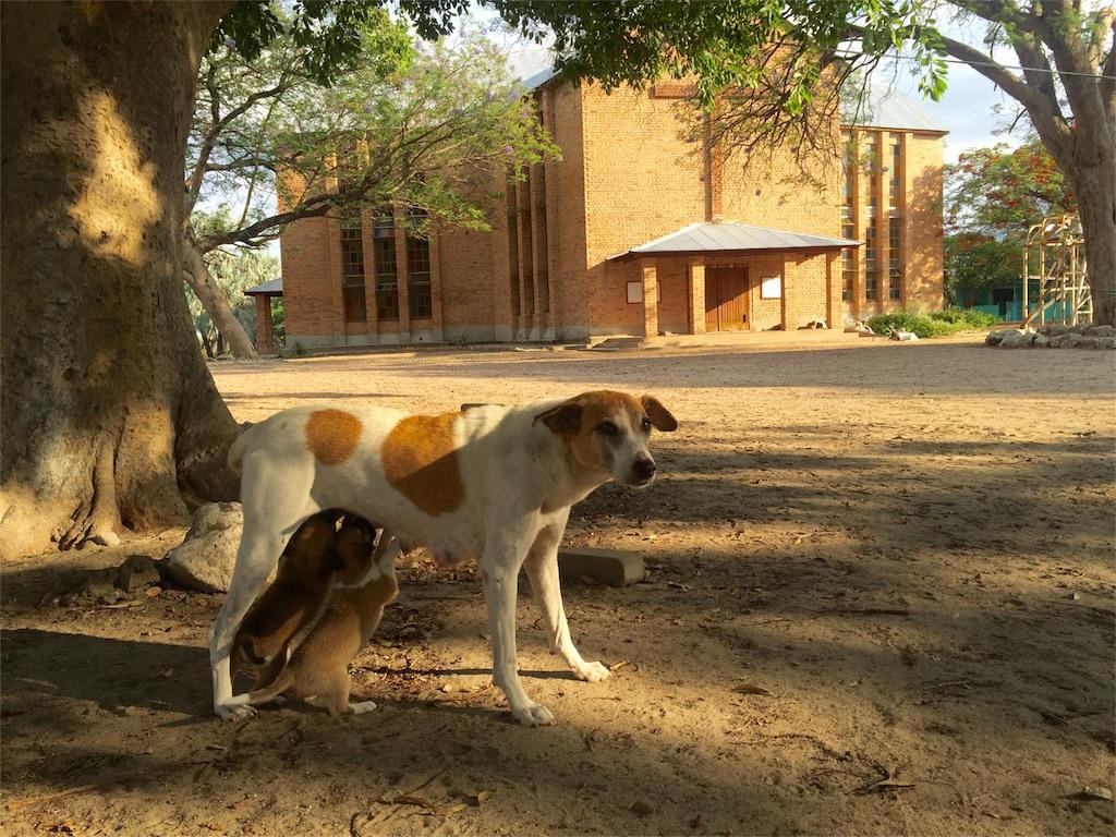 f:id:TPVC28-Namibia:20161207104912j:image