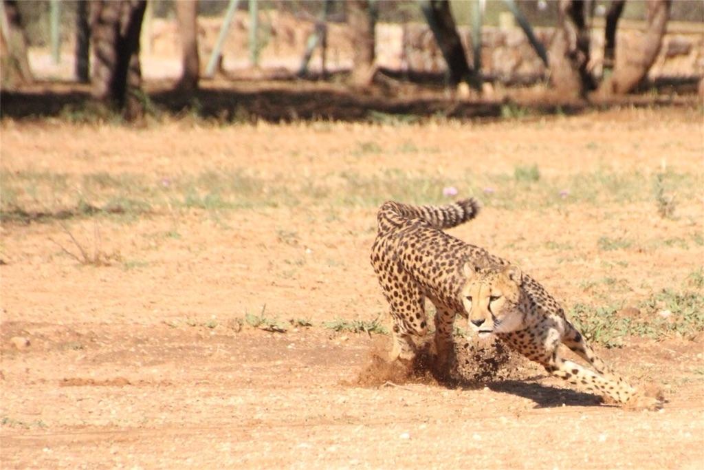 f:id:TPVC28-Namibia:20161212050422j:image