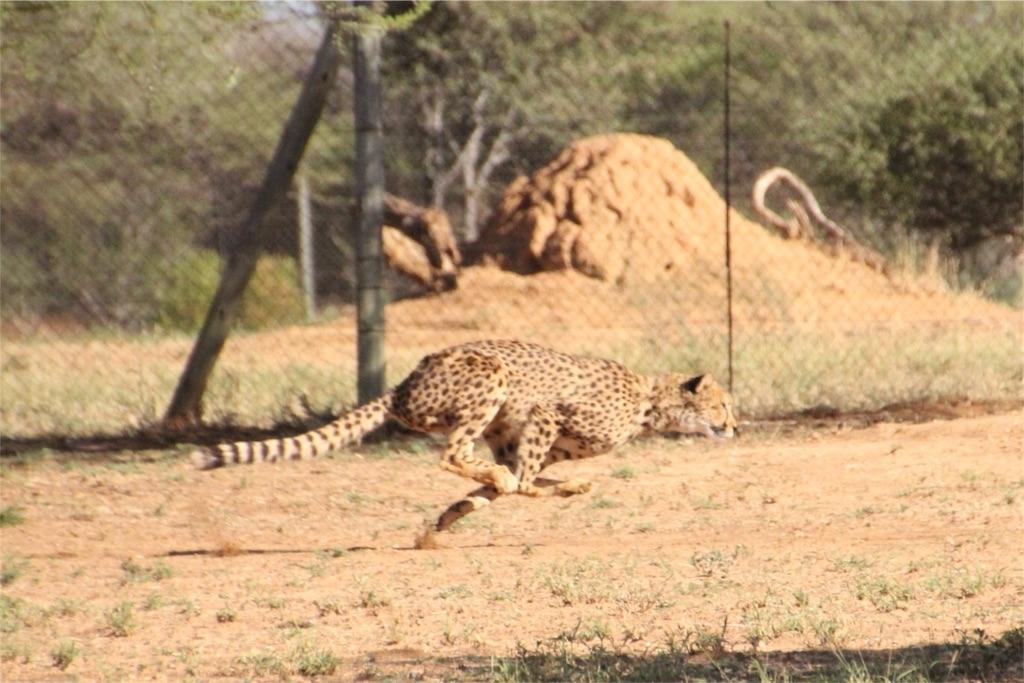 f:id:TPVC28-Namibia:20161212050852j:image
