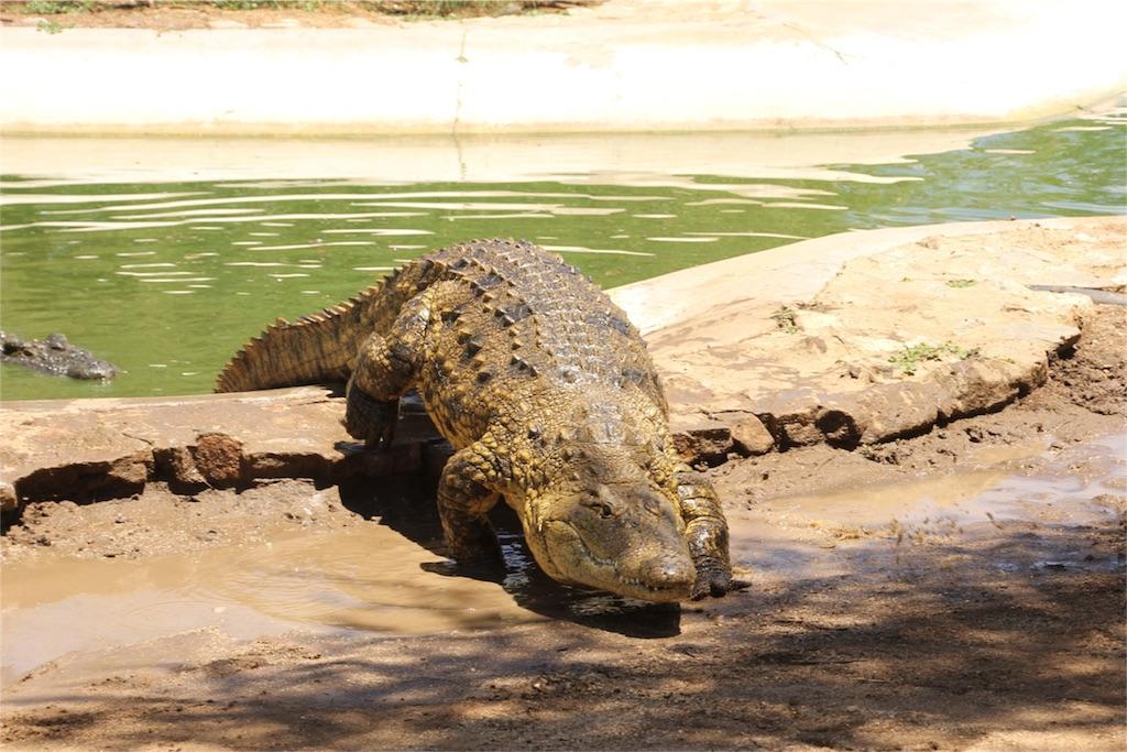 f:id:TPVC28-Namibia:20161212051329j:image