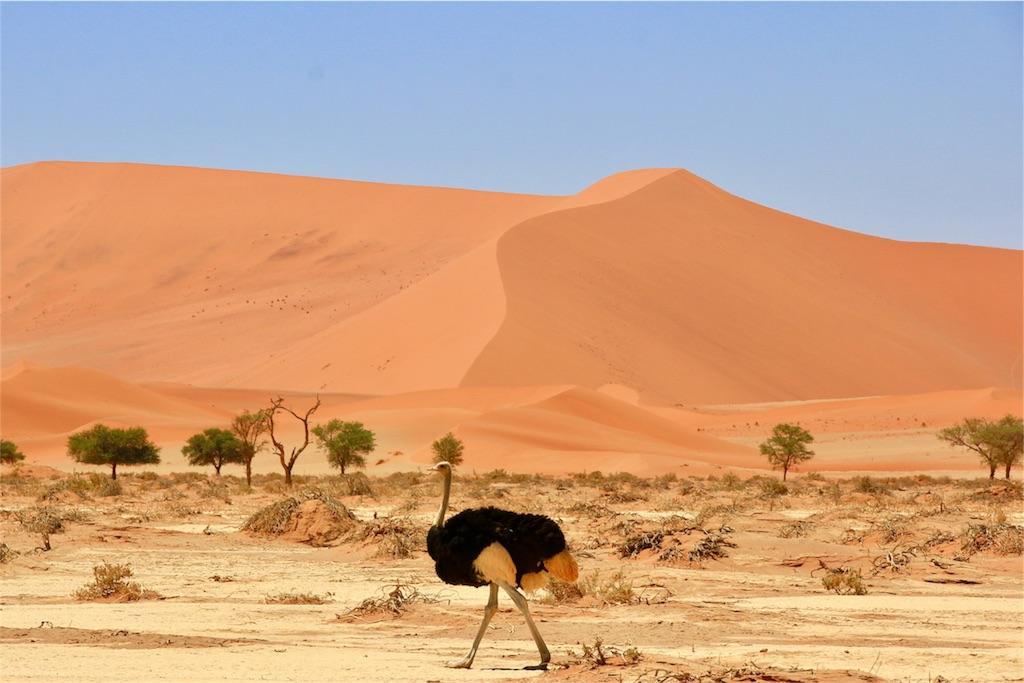 f:id:TPVC28-Namibia:20170103042944j:image