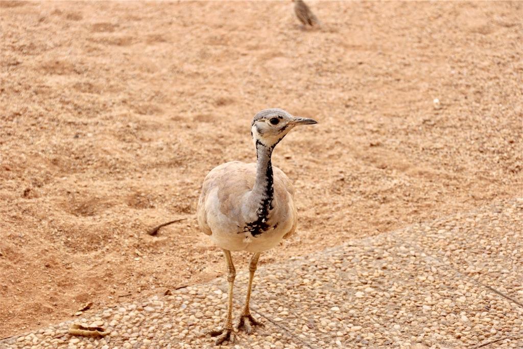 f:id:TPVC28-Namibia:20170103043304j:image