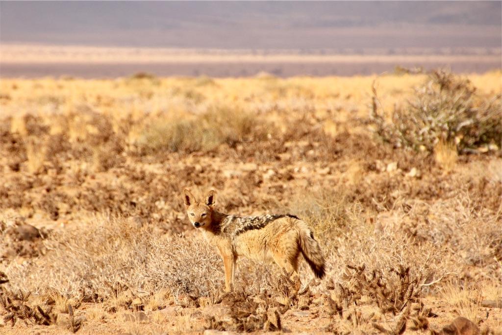 f:id:TPVC28-Namibia:20170104025432j:image