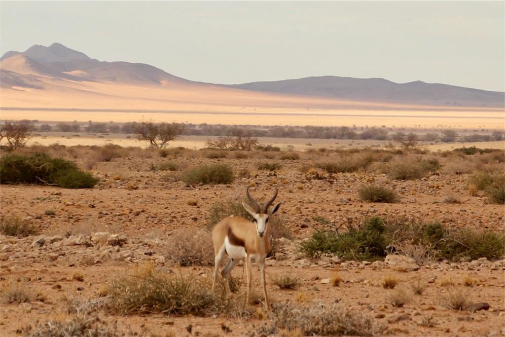 f:id:TPVC28-Namibia:20170104025627j:image