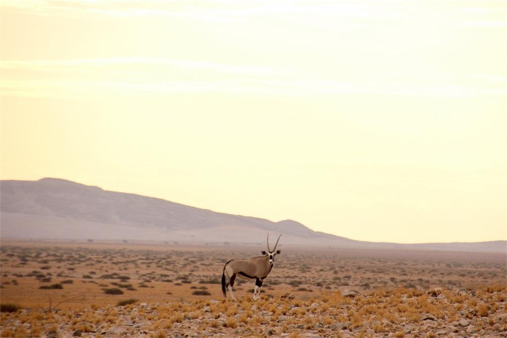 f:id:TPVC28-Namibia:20170104025821j:image