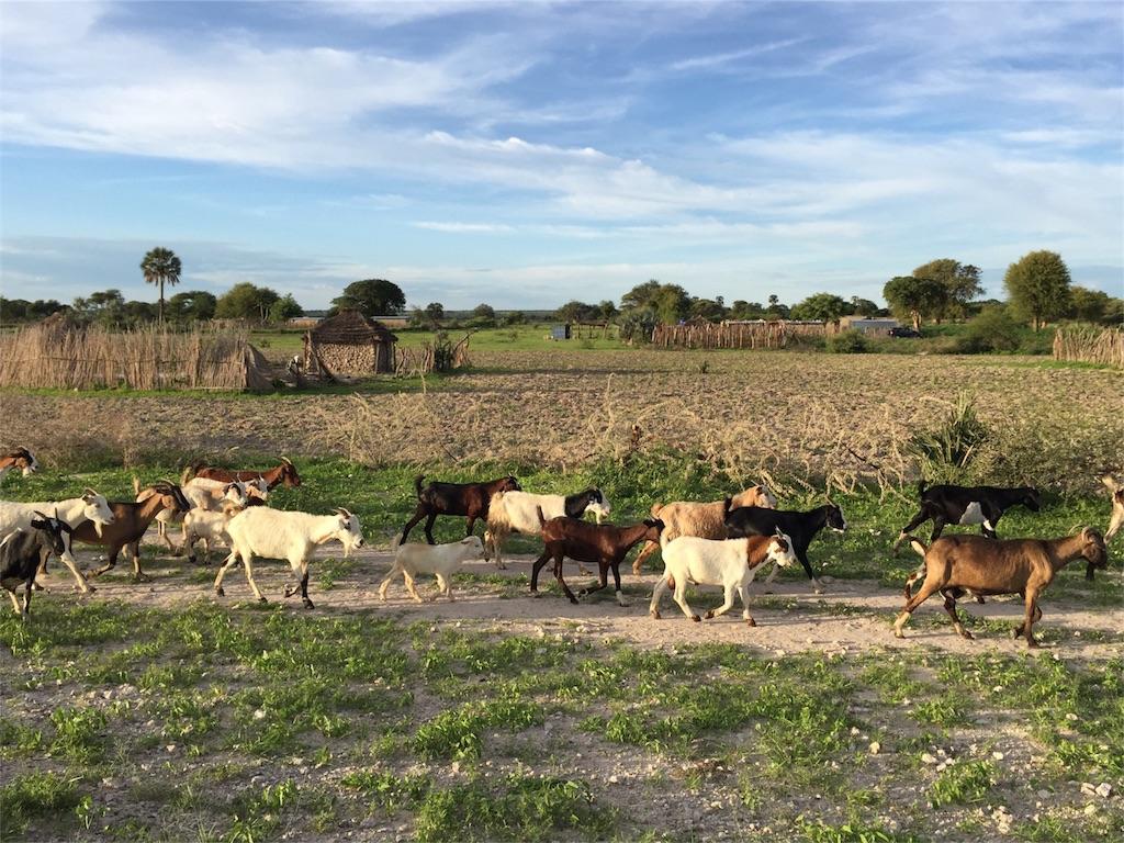 f:id:TPVC28-Namibia:20170110173507j:image