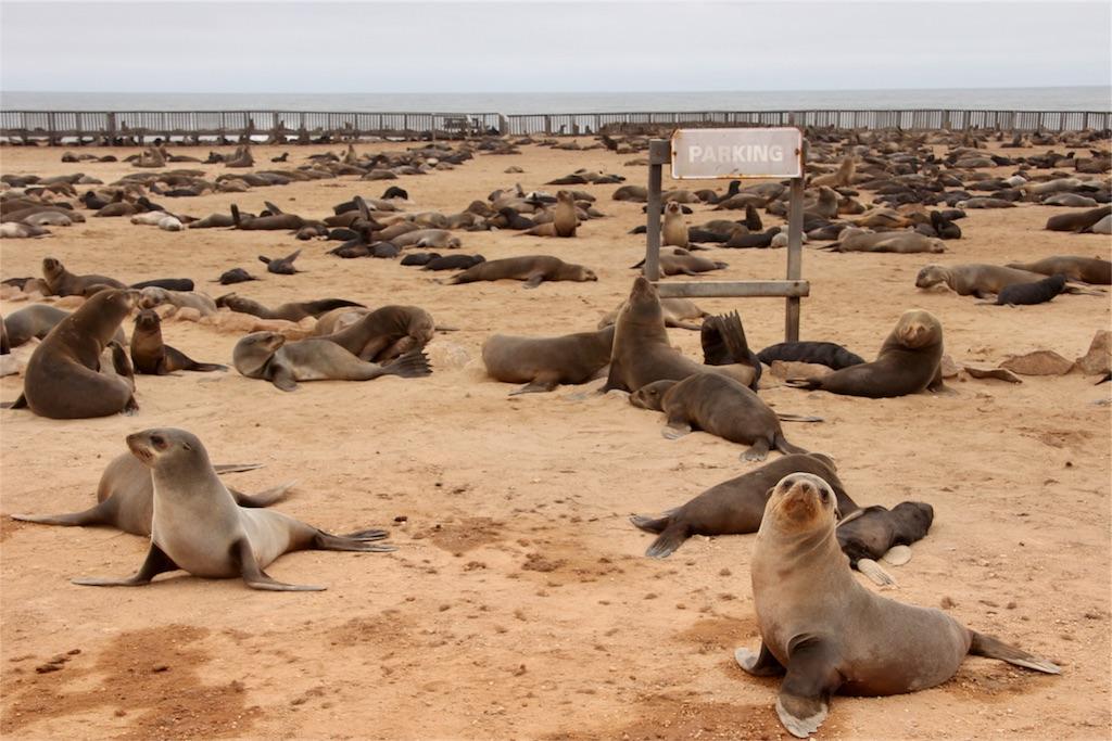 f:id:TPVC28-Namibia:20170305161519j:image