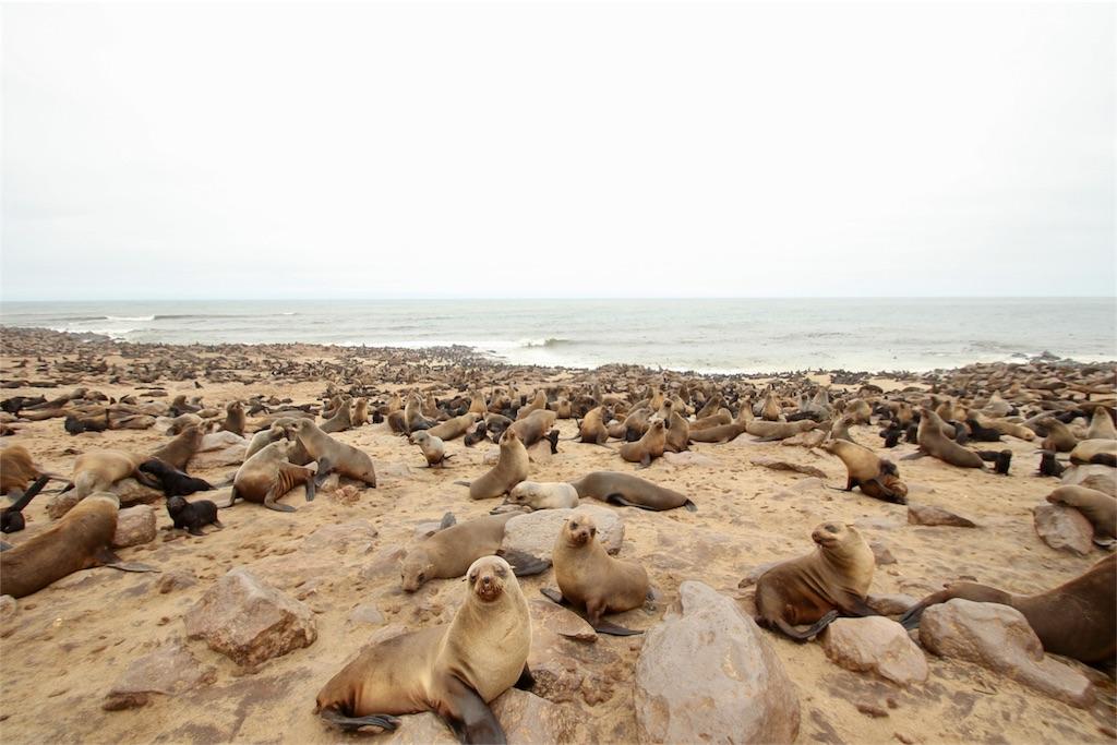 f:id:TPVC28-Namibia:20170305162051j:image