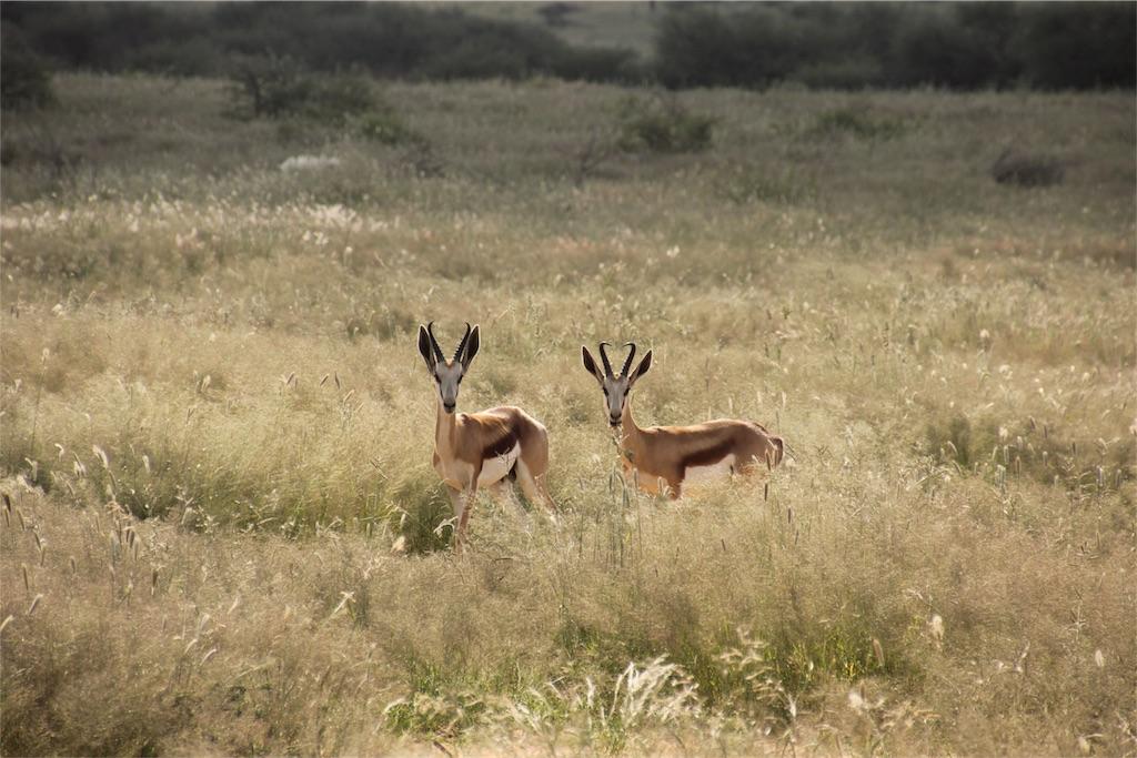 f:id:TPVC28-Namibia:20170319151612j:image
