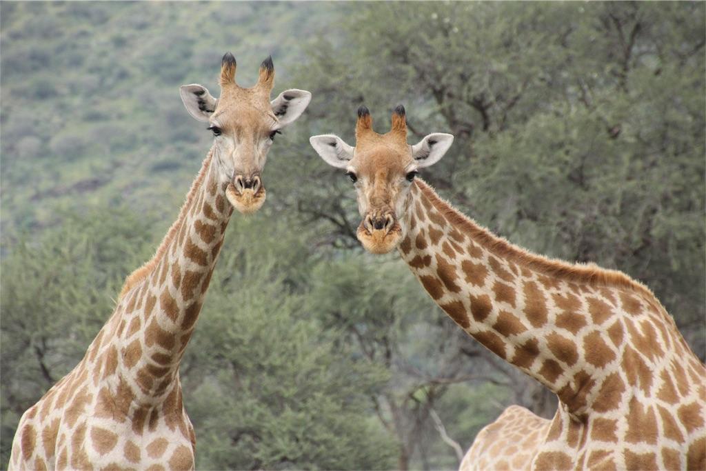 f:id:TPVC28-Namibia:20170319151647j:image