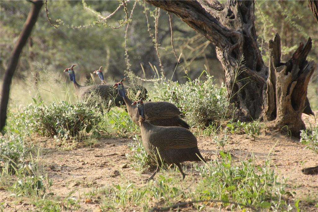 f:id:TPVC28-Namibia:20170319151841j:image