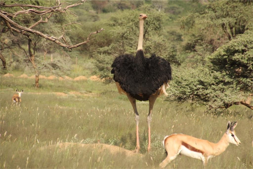 f:id:TPVC28-Namibia:20170319153734j:image