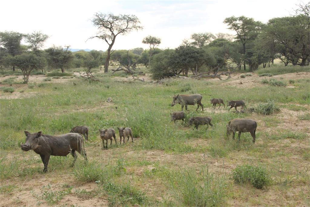 f:id:TPVC28-Namibia:20170319153907j:image
