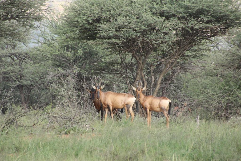 f:id:TPVC28-Namibia:20170319153955j:image
