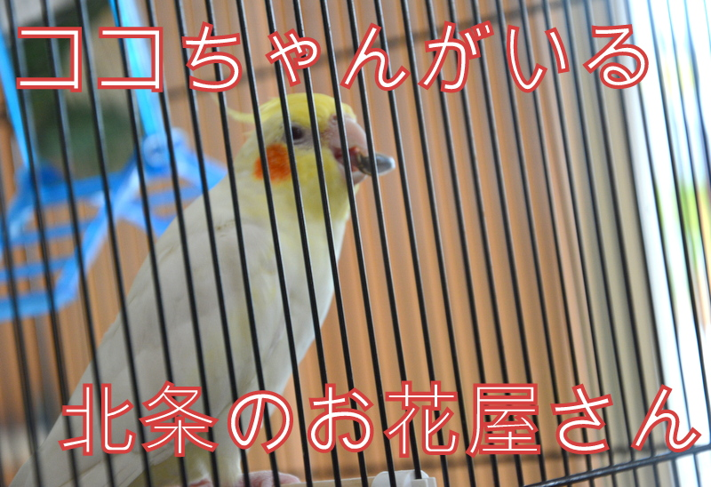 f:id:TSUKUBAtaishis:20160922224944j:plain