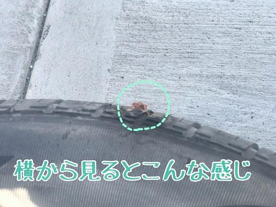 f:id:TSURUchan:20190329195124j:plain