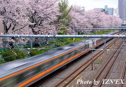 桜×E233系