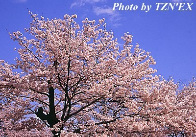 f:id:TZNEX:20100411232131j:image