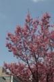 高松市内の梅