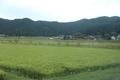 予讃線の車窓風景(卯之町付近)