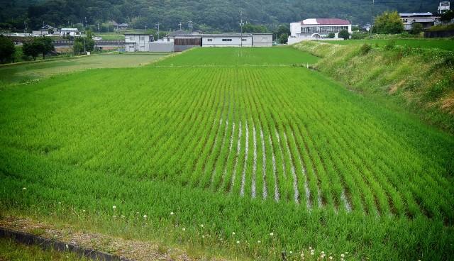f:id:T_yuki:20170628000100j:image