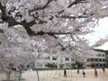 [2015][Japan]Sakura