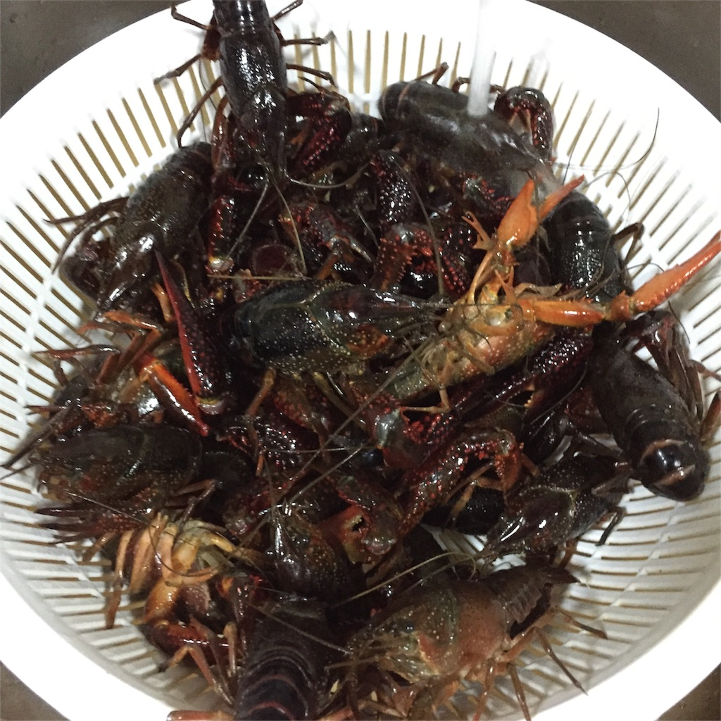 crawfishes (before cook)