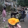[China][2019]Yummy potato
