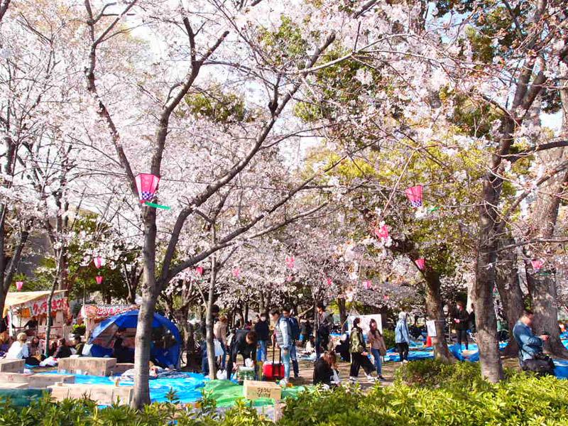 鶴舞公園お花見