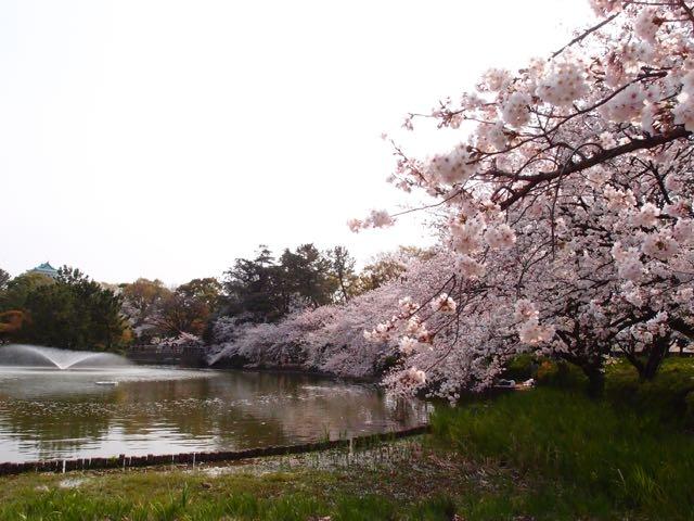 名城公園の桜と噴水