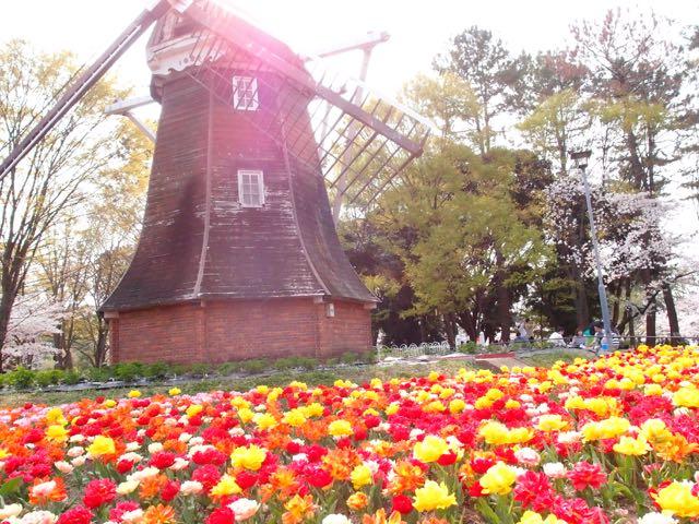 名城公園の風車と花