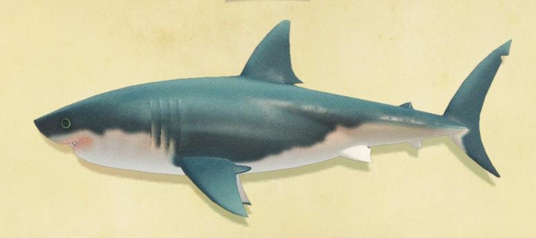あつ森のサメ