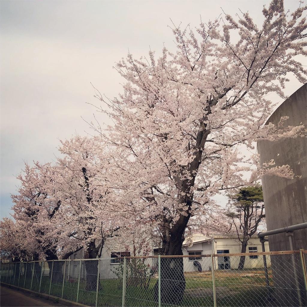f:id:TakakoSakaba:20190412154251j:image