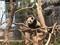 マカオのこどもパンダ