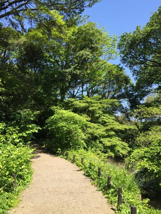 木々の緑と青空のコントラストの写真